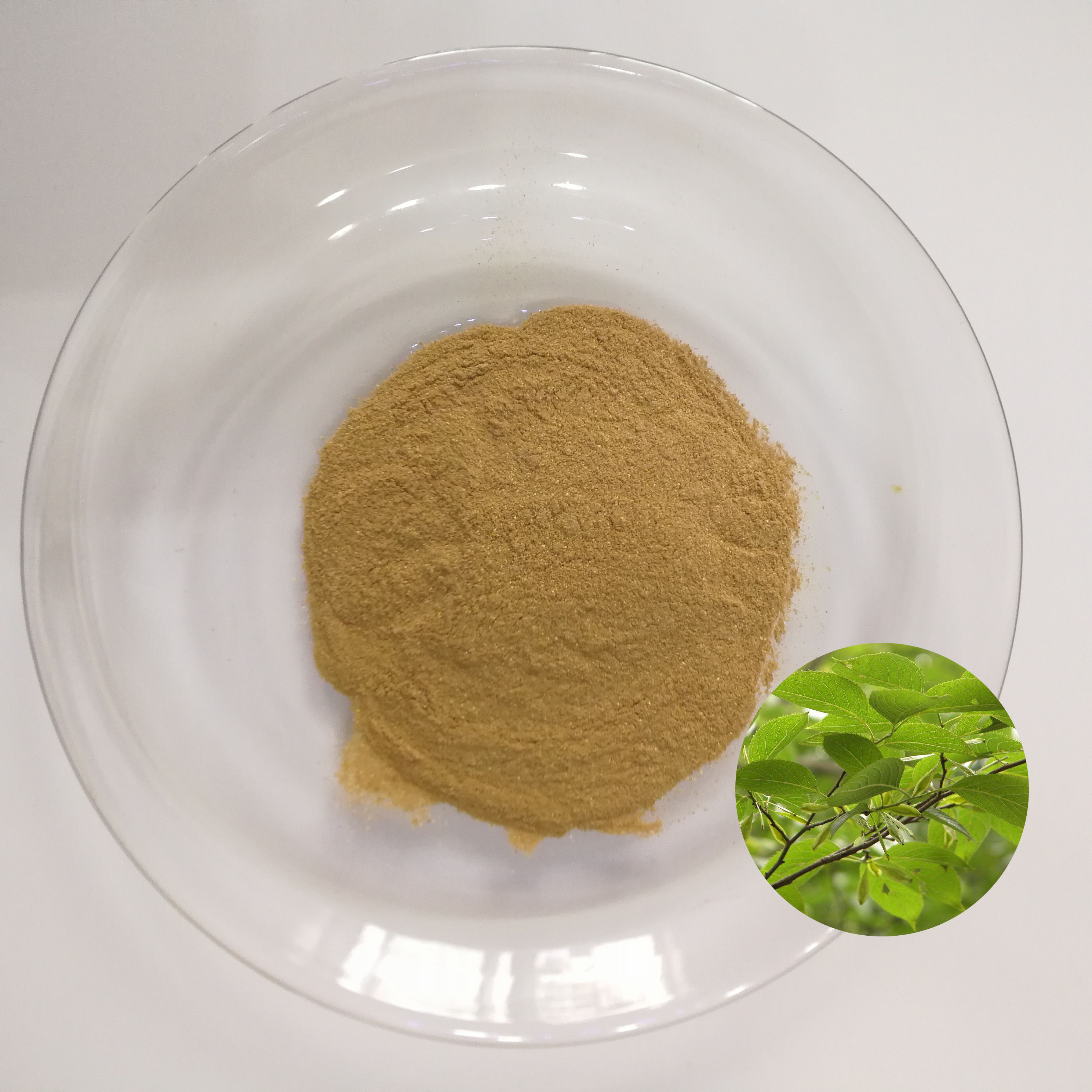 Alternative antibiotics eucommia leaf extract