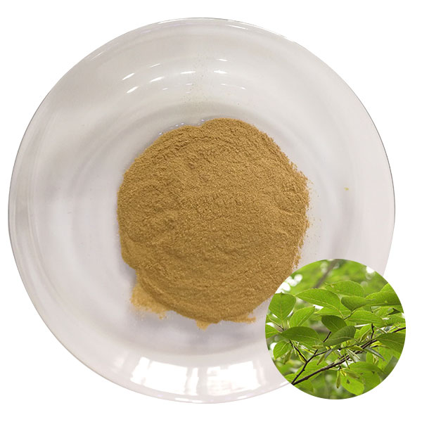 Eucommia Leaf Extract